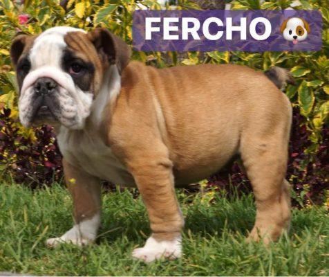 fercho1